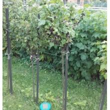 Podpora roślin, tyczka do pomidorów, niskich krzaków, kątownik 30x30x2 dł 137cm - DOMOWO24.PL